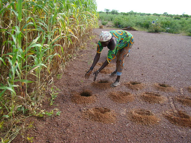 © CC Innovative farming practices in the Sahel