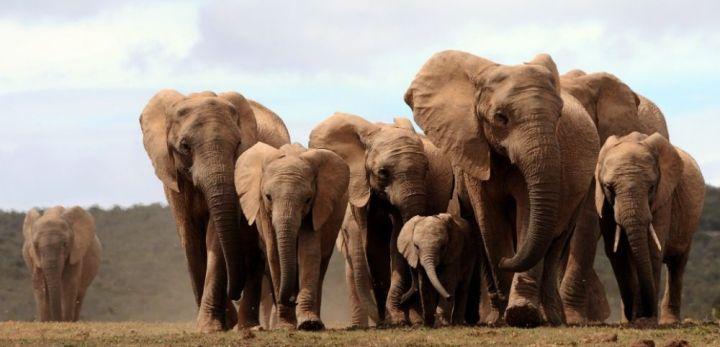famille éléphants.jpg